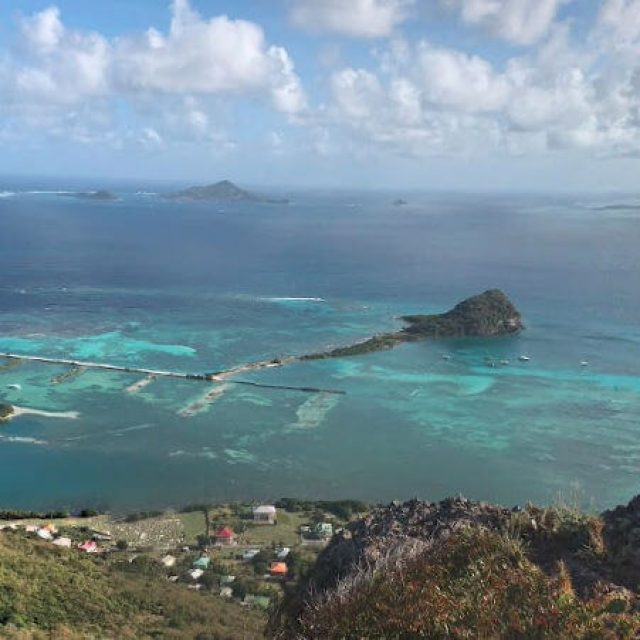 Frigate – Union Island (Les Grenadines)