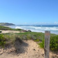 Longreef Beach - Collaroy (Australie) 4