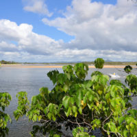 River Mouth - Noosa (Australie) 3